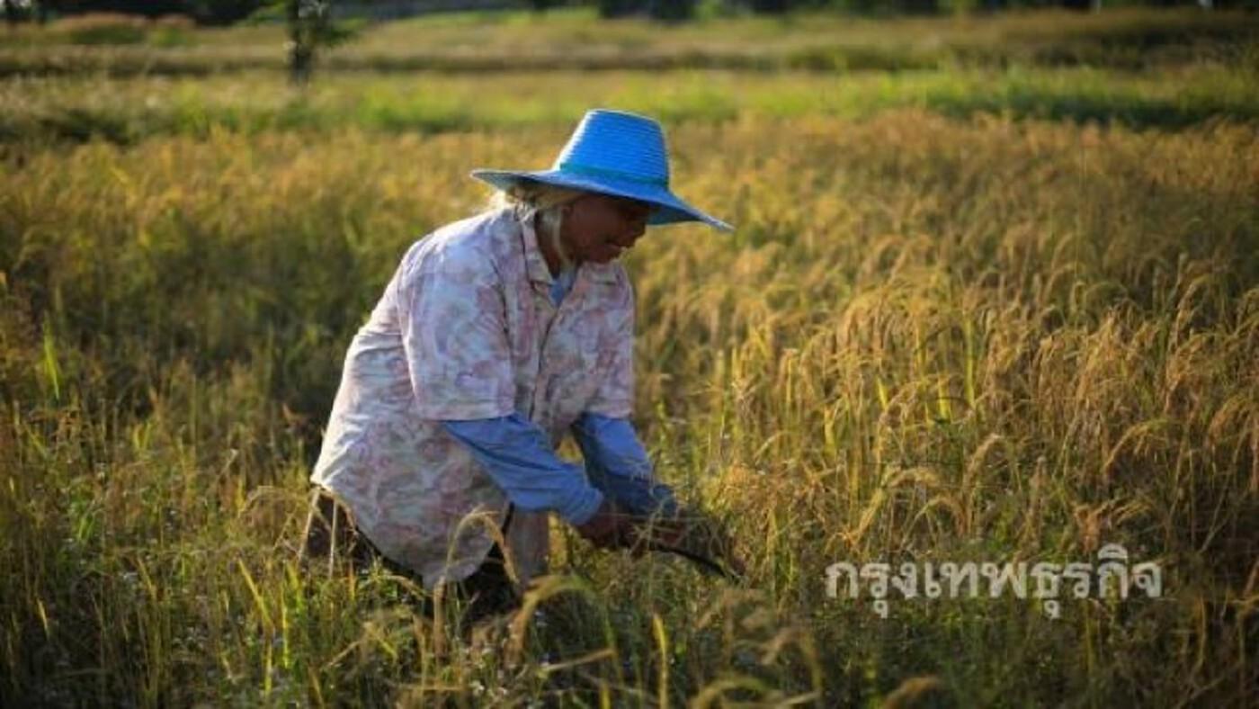 จับตาเกษตรฯขอ 1.5 แสนล้าน เงินกู้ฟื้นฟูเศรษฐกิจหลัง 'โควิด'