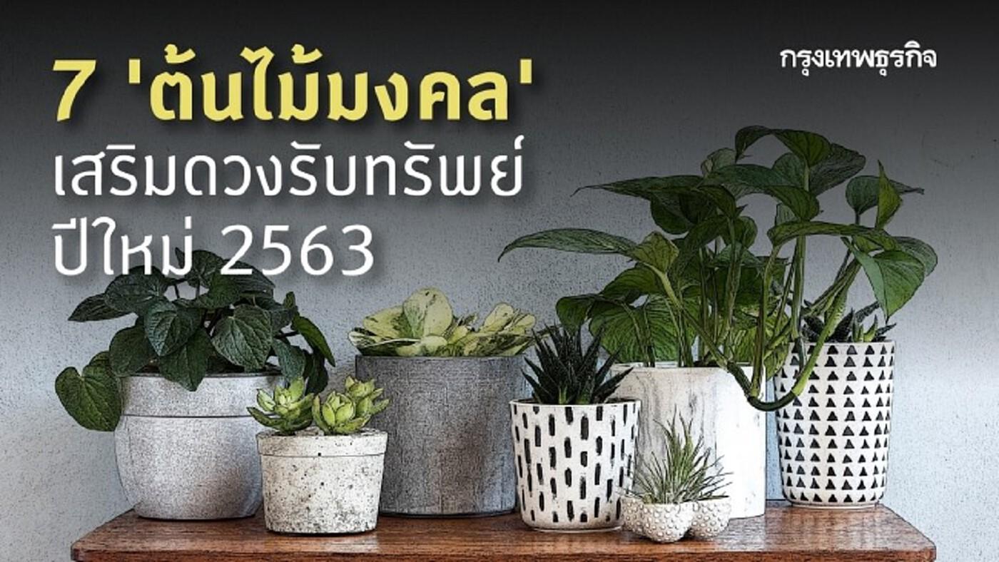 7 'ต้นไม้มงคล' ปลูกในบ้าน เสริมดวงรับทรัพย์ปีใหม่ 2563