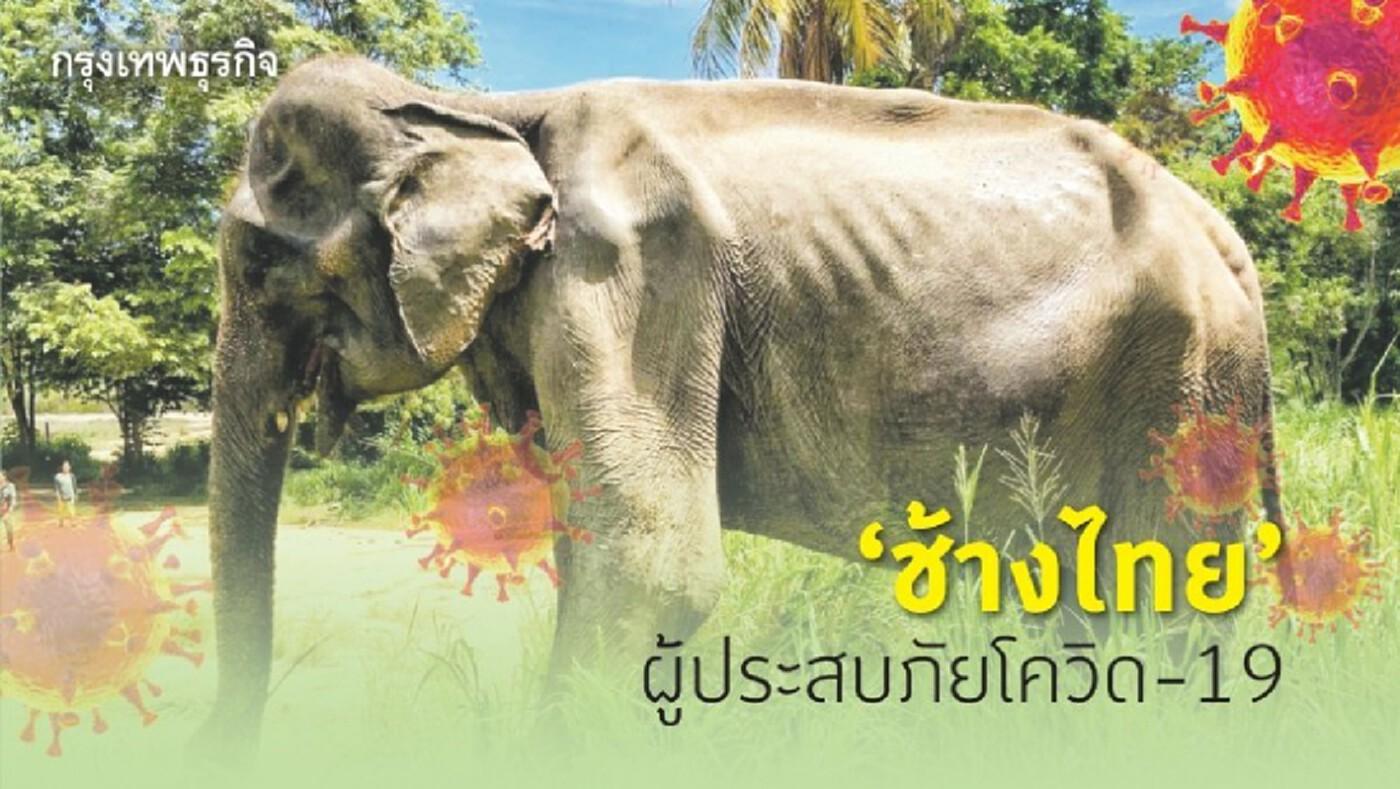'ช้างไทย' ผู้ประสบภัยโควิด-19