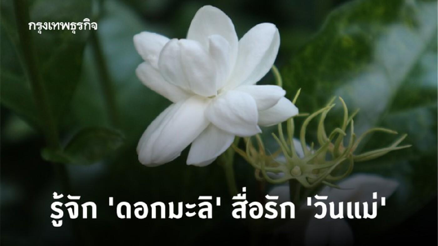 'ดอกมะลิ' สื่อรัก 'วันแม่' และความหมายที่ซ่อนอยู่