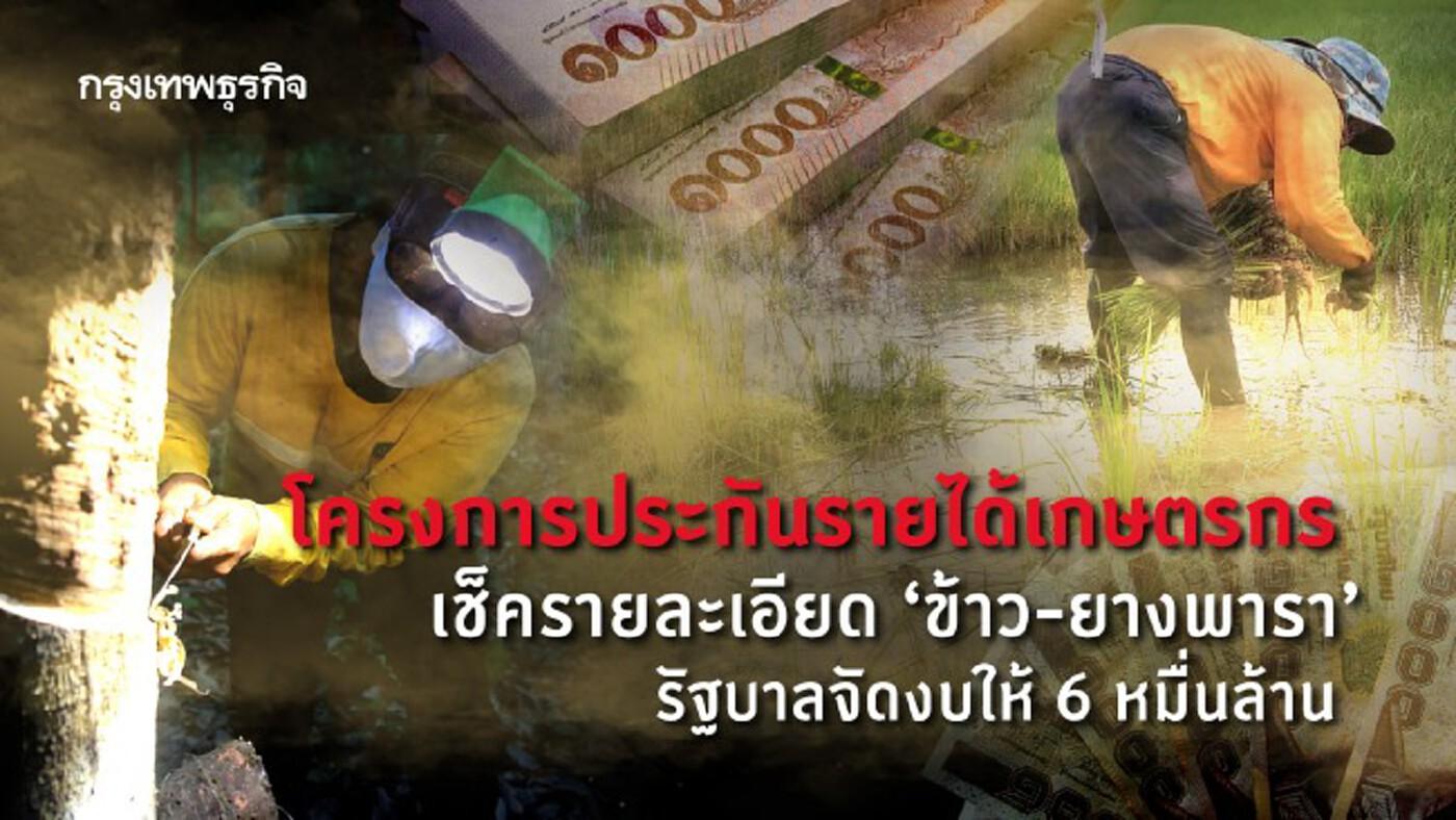 โครงการประกันรายได้เกษตรกร เช็ครายละเอียด 'ข้าว' - 'ยางพารา' รัฐบาลจัดงบให้ 6 หมื่นล้าน