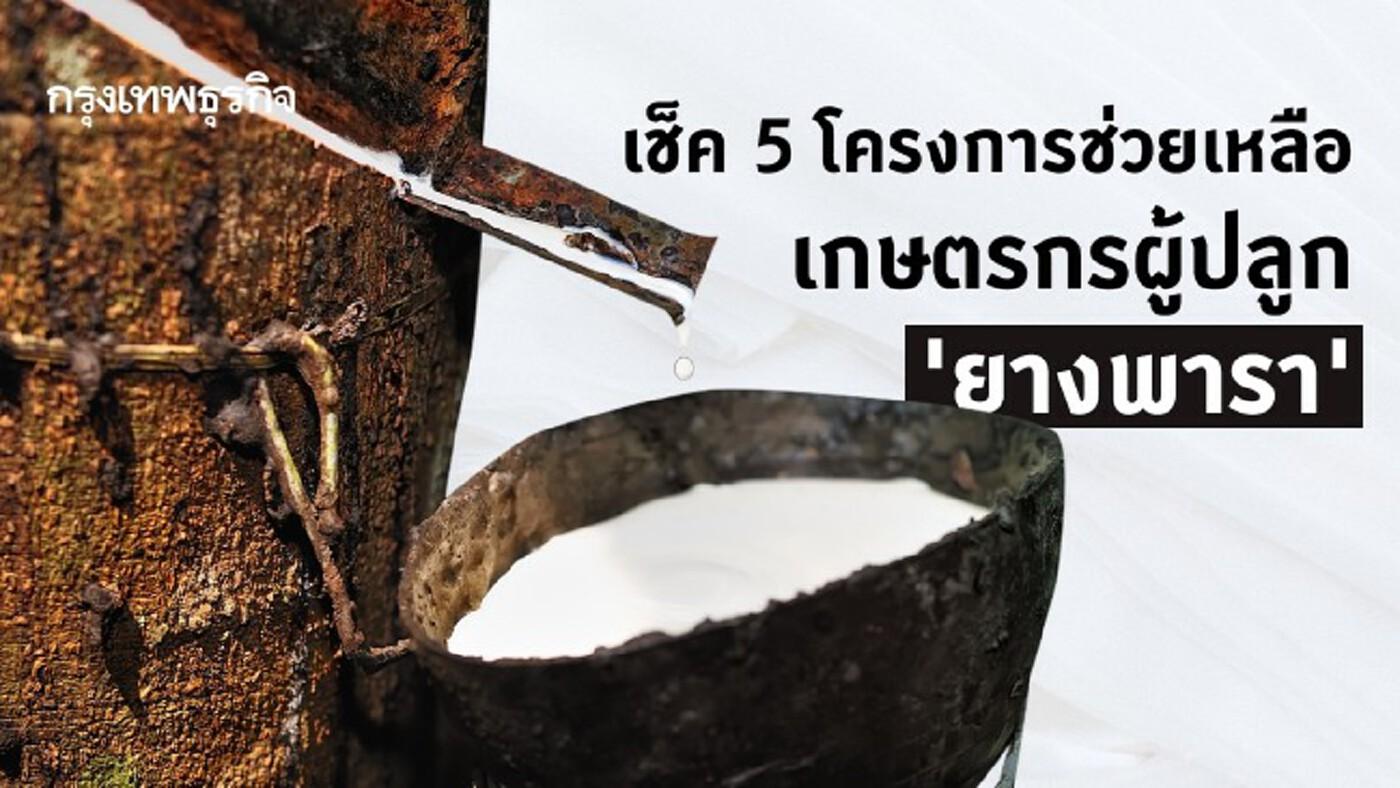 ปลูก 'ยางพารา' เช็คด่วน! 5 โครงการช่วยเหลือเกษตรกรผู้ปลูก 'ยางพารา'