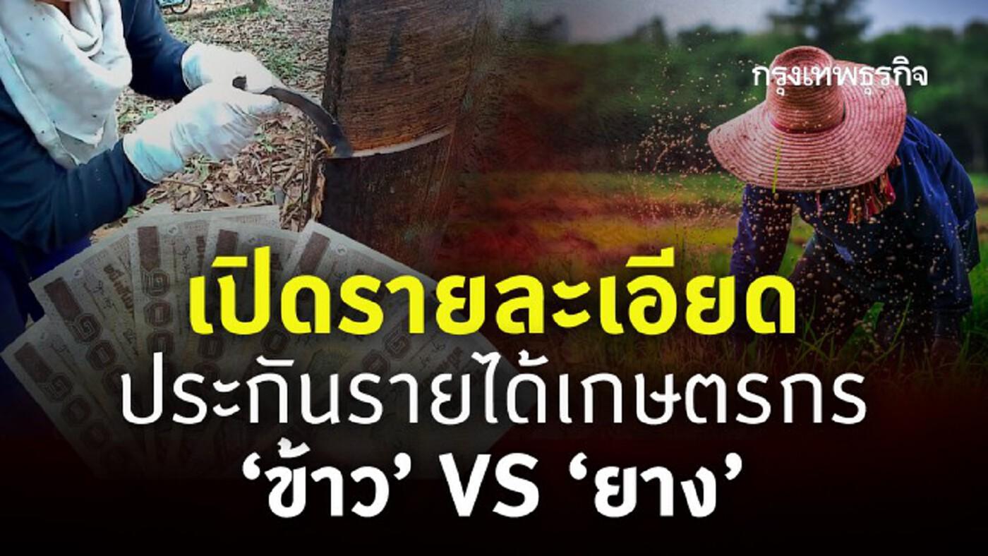 สรุป! 'ประกันรายได้เกษตรกร' เทียบ 'ข้าว' VS 'ยาง' ใครได้เท่าไหร่บ้าง