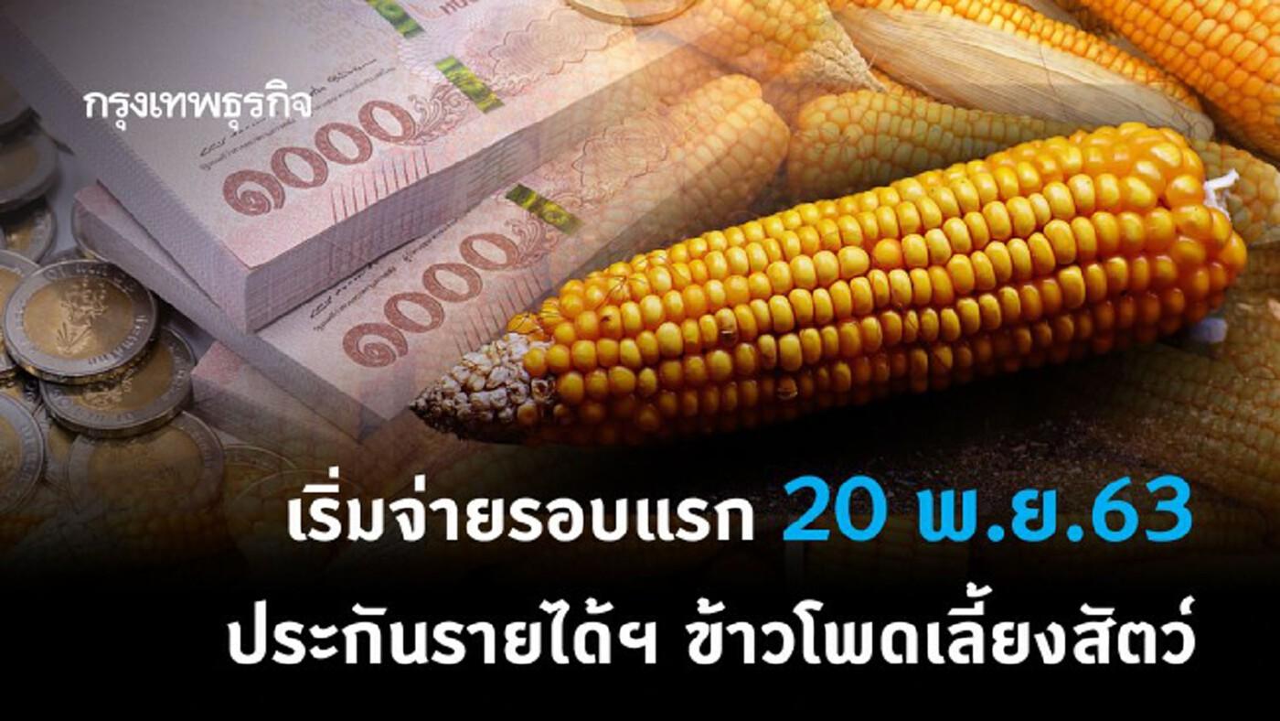 เริ่มวันนี้! ธ.ก.ส.จ่ายเงิน 'ประกันรายได้เกษตรกร' ผู้ปลูกข้าวโพดเลี้ยงสัตว์