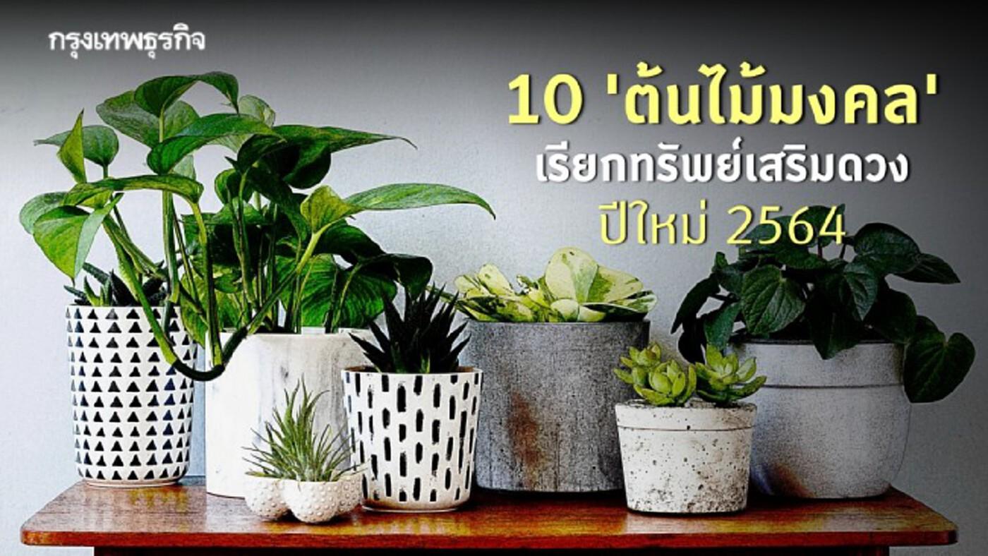 10 'ต้นไม้มงคล' เสริมดวงรับทรัพย์ เฮงเฮงเฮงรับ 'ปีใหม่ 2564'