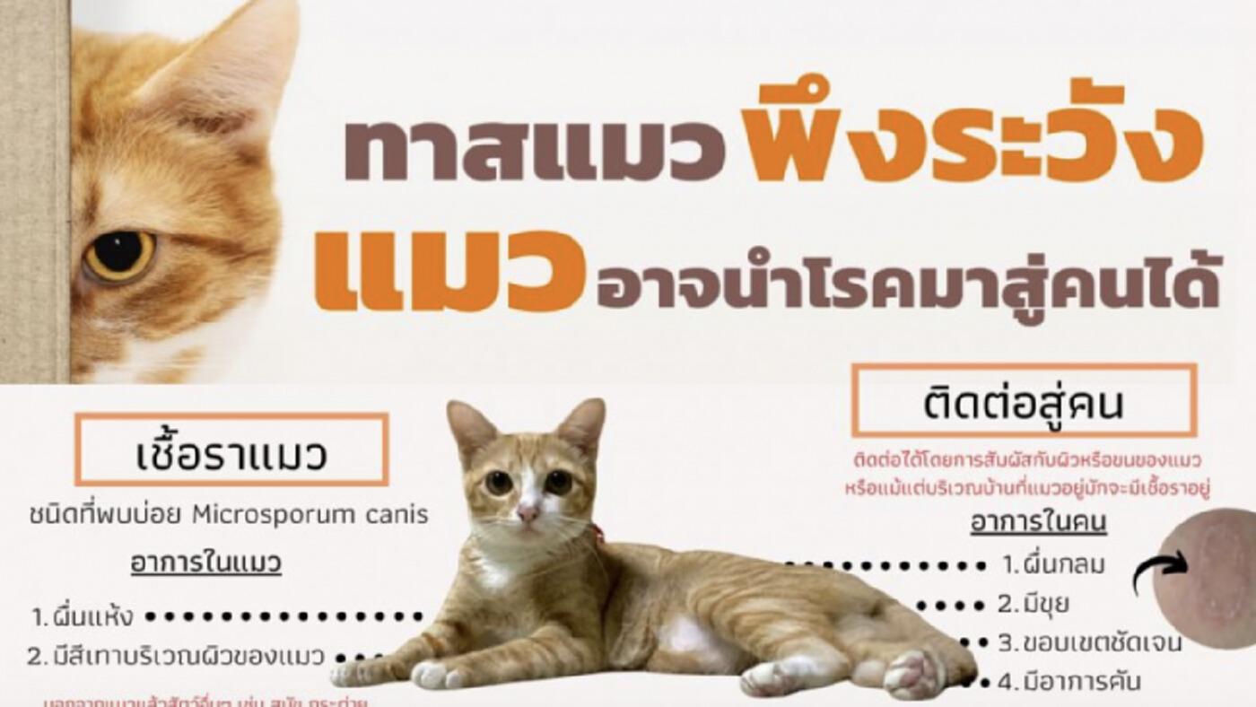 แพทย์ผิวหนังเตือนทาสแมวพึงระวัง แมวอาจนำโรคมาสู่คนได้