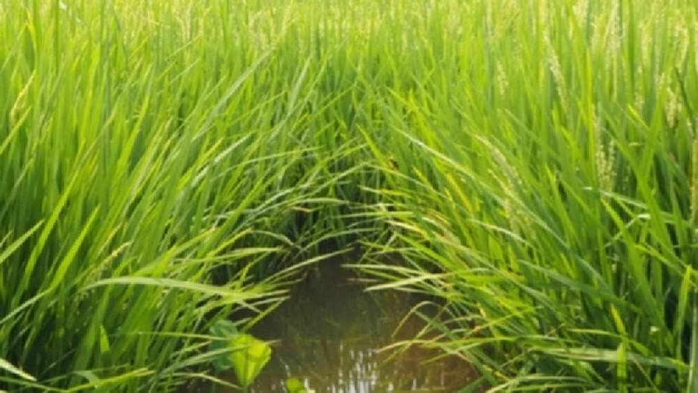 วช.หนุนจัดการ 'ภัยแล้ง' ส่งเทคฯช่วยผันน้ำตามความต้องการด้านเกษตรกรรม!
