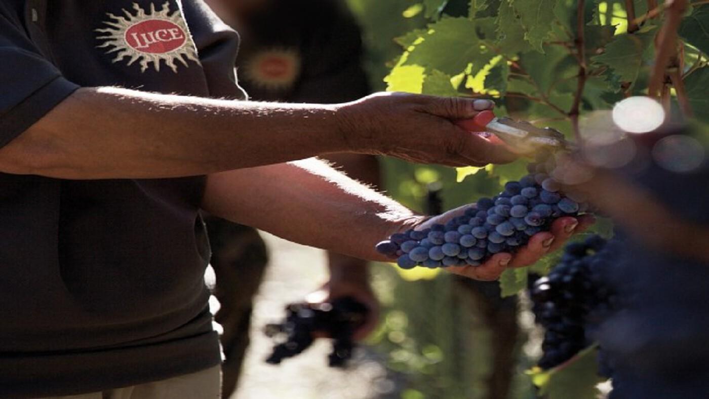 ฉลองไวน์ 'ซูเปอร์ทัสคัน' 25 ปี ด้วย 'ลูเช เดลเล วิเต 2017'