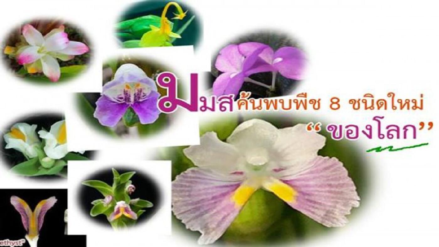 พืช 8 ชนิดใหม่ของโลก! นักวิจัย มมส ค้นพบ แต่บางทีคนไทยยังไม่รู้