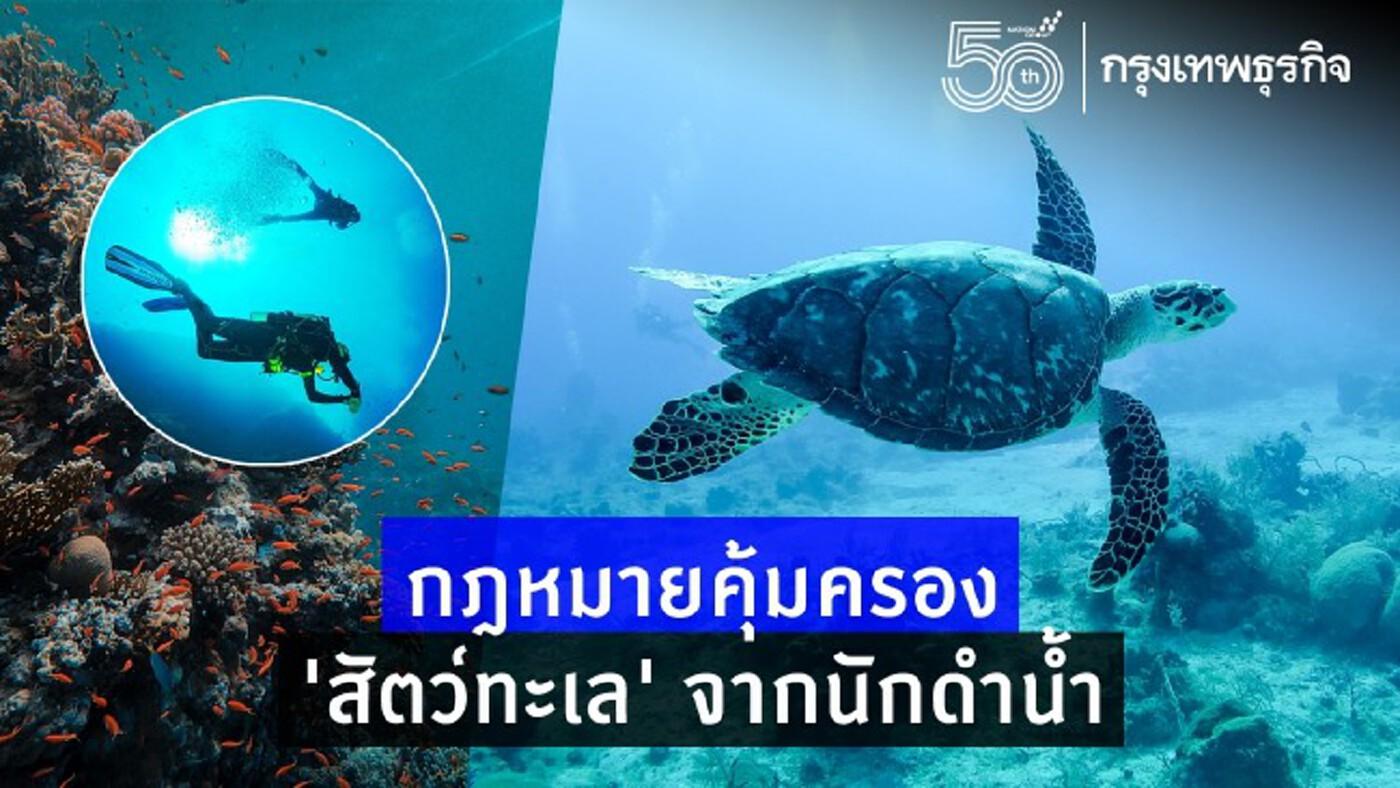 กฎหมายคุ้มครอง 'สัตว์ทะเล' จากนักดำน้ำ