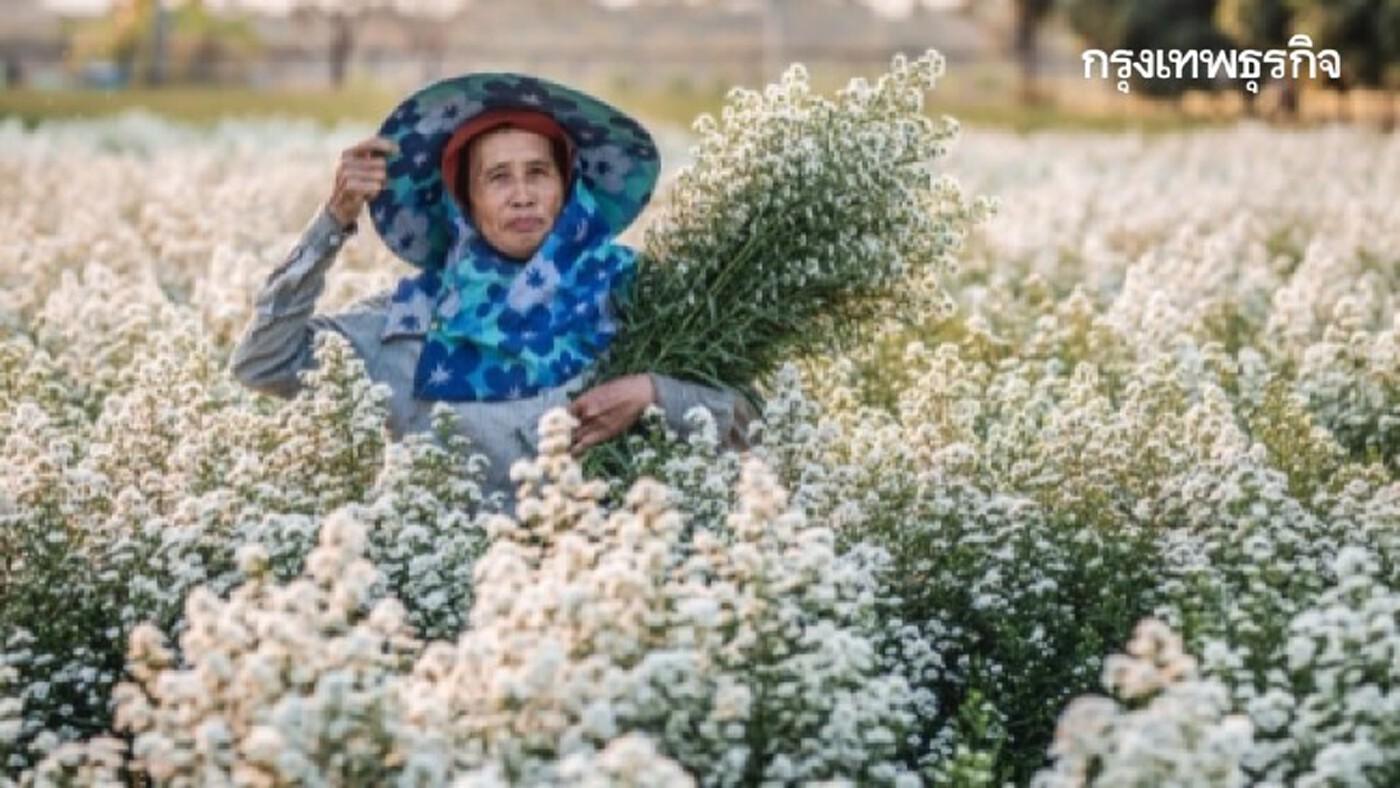 วว. พัฒนา 'คลัสเตอร์ไม้ดอกไม้ประดับ' เพาะเลี้ยงถูกวิธี! หนุนเอสเอ็มอีฝ่าวิกฤติ