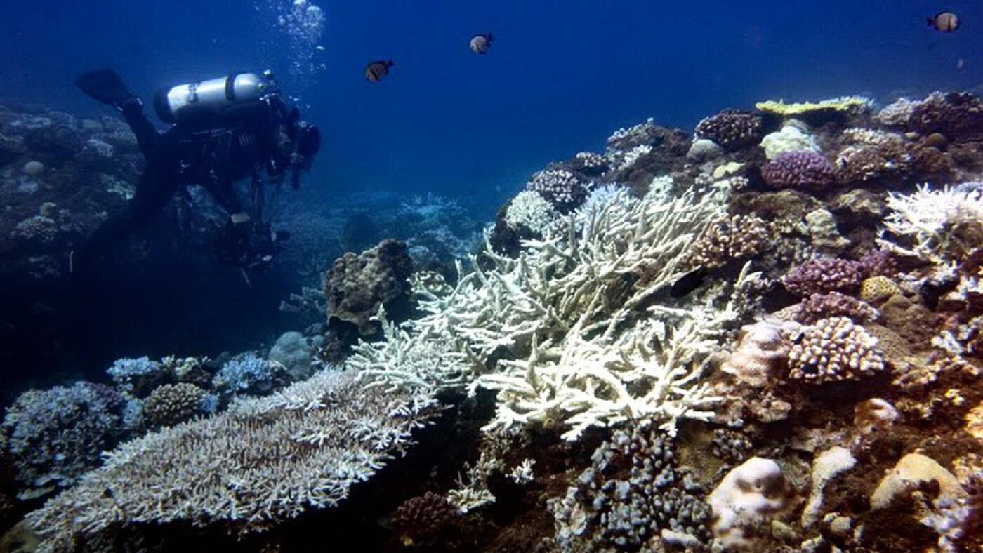 ส่องทางออกคนรักทะเล เมื่อไทย 'ห้ามใช้ครีมกันแดด' ในพื้นที่อุทยานแห่งชาติ