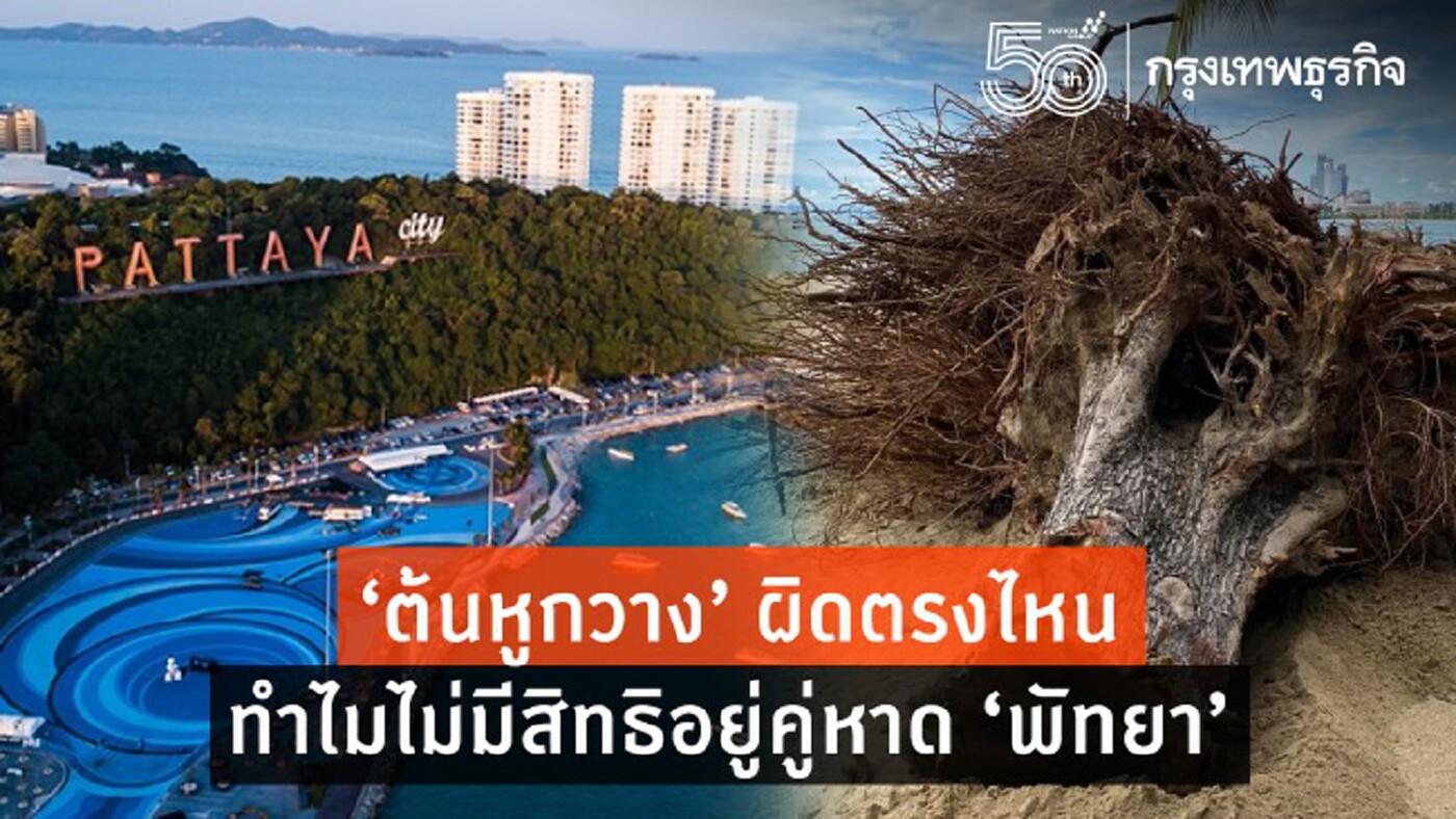 'ต้นหูกวาง' ผิดตรงไหน ทำไมไม่มีสิทธิอยู่คู่หาด 'พัทยา'