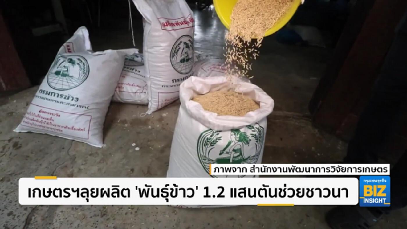 เกษตรฯลุยผลิต 'พันธุ์ข้าว' 1.2 แสนตันช่วยชาวนา