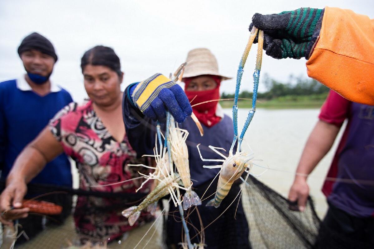 เกษตรกรผู้เลี้ยงกุ้งกาฬสินธุ์ รวมกลุ่มสู้โควิด-19 รับแรงงานคืนถิ่น
