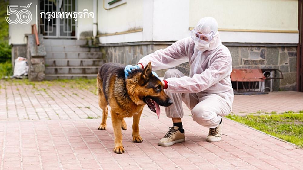 """เมื่อติด """"โควิด-19"""" เป็นกลุ่มเสี่ยง ทำอย่างไรให้ น้องหมา แมว ปลอดภัย"""