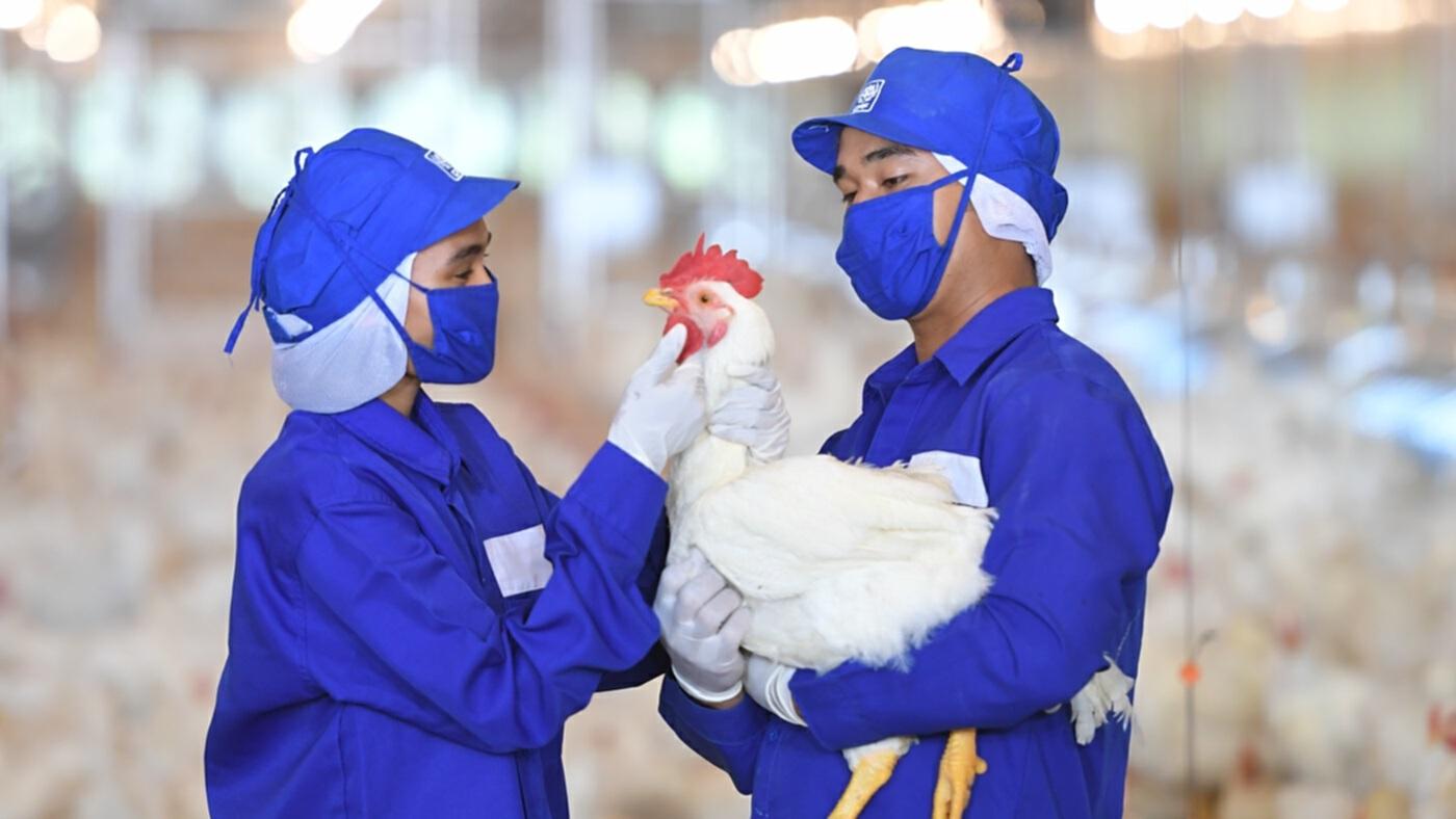 อุตสาหกรรมไก่เนื้อไทย ดันความเชื่อมั่นมาตรฐานโลก