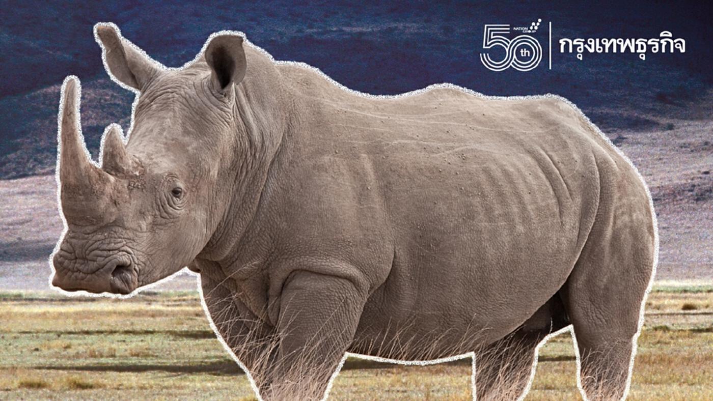 """อย่าลืมแรด! """"วันแรดโลก"""" 22 กันยายน ร่วมอนุรักษ์แรด 5 สายพันธุ์ทั่วโลก"""