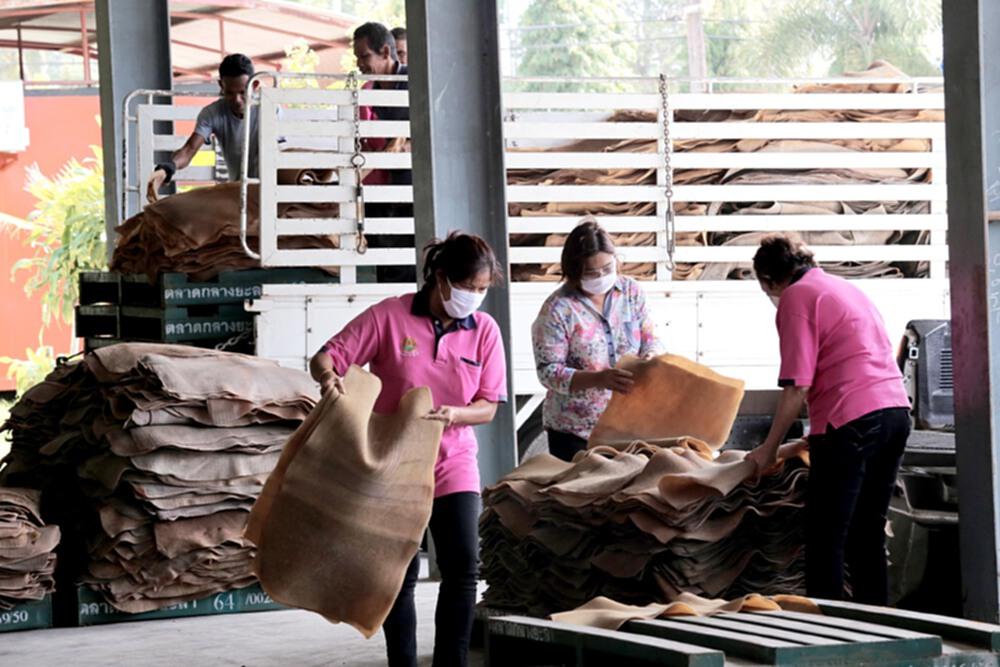 ราคายางพารา (การยางแห่งประเทศไทย) ประจำวันที่ 14 ตุลาคม 2564