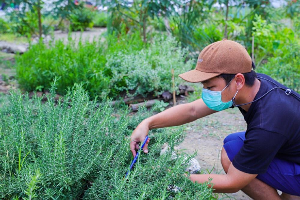 เซ็นทรัลพัฒนาชวนสร้าง สวนผักคนเมือง ปลูกผักปลอดสาร ใคร ๆ ก็ทำได้