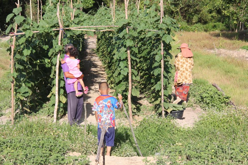 โครงการพระราชดำริ ร.9 ช่วยเกษตรกรสร้างงานสร้างรายได้สู้โควิด-19