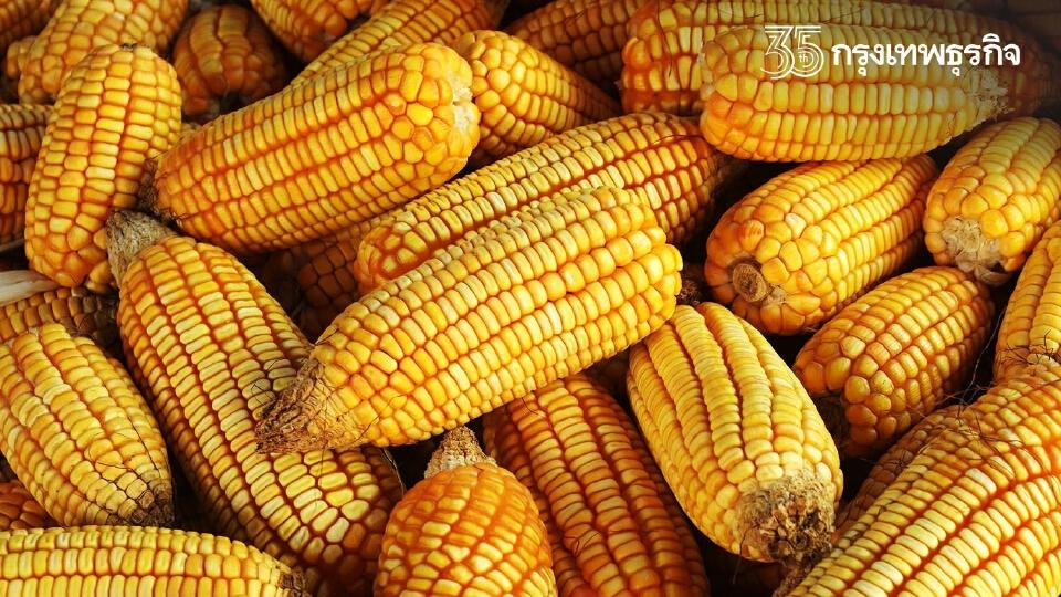 ตรวจสอบ ประกันรายได้เกษตรกร ข้าวโพดเลี้ยงสัตว์ปี 2563/64 (งวดที่ 12)