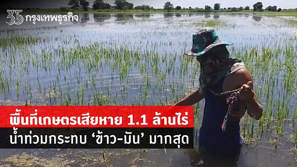 """พื้นที่เกษตรเสียหาย 1.1 ล้านไร่ น้ำท่วมกระทบ""""ข้าว-มัน""""มากสุด"""